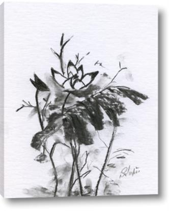 Picture of Black Daisy I